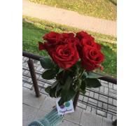 Букет | 7 роз